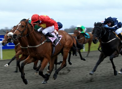 One irish companys technology is helping create the perfect racehorse negle Images