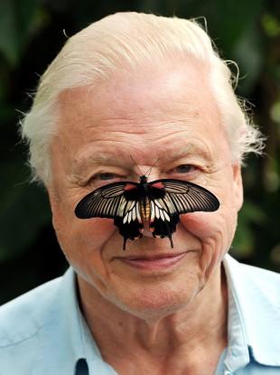 David Attenborough (and friend).