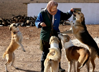 A visitor playing with dogs at an animal shelter outside of Tehran in 2014