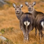 Declan Roche of Wexford spotted these deer at Glenealo Valley in Wicklow.