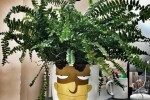 A Dublin designer turned his colleague's plant into a brilliant Simpsons reference when he was on holiday
