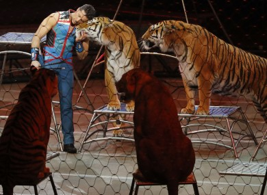 Big cat trainer Alexander Lacey hugs one of the tigers during the final show of the circus.