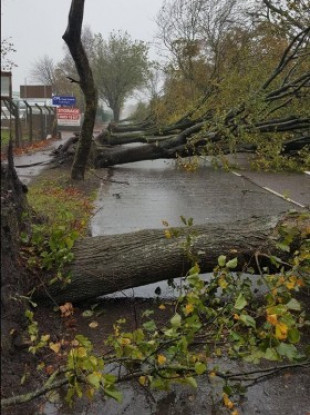 A succession of trees lie fallen in the wake of Storm Ophelia on Centre Park Road in Cork city.