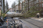 A tree uprooted by heavy winds in Amsterdam earlier today
