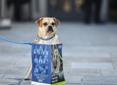 Finn was on hand today as the Irish Society for the Prevention of Cruelty to Animals launched its annual Inspectorate Report at the Mansion House in Dublin.