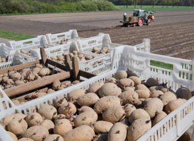 Don't cut potatoes out of your diet completely.