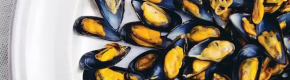 Poll: Does the meat or the shell of a mussel weigh more?