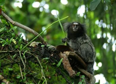 An inhabitant of the remote lowland Amazon rainforest.