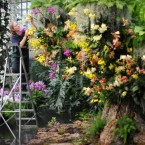 Anne Rostek adds the finishing touches to the Tropical Extravaganza display at Kew Gardens in London.<span class=