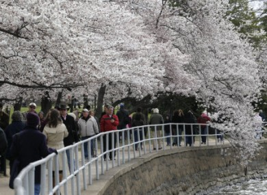 The cherry on top: it's National Cherry Blossom Festival in Washington, US. Nice.