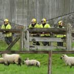 Local firefighters await Queen Elizabeth II's visit to the Rock of Cashel. (Pic: Maxwells)