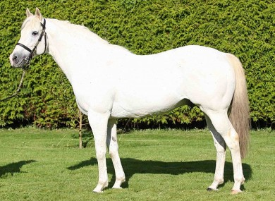 The stallion Verglas, which was due to be paraded before the Queen today, died on Tuesday.