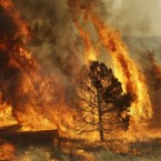 A massive wildfire in eastern Arizona that has claimed more than 30 homes and forced nearly than 10,000 people to evacuate is likely to spread into New Mexico soon. (AP Photo/Marcio Jose Sanchez)