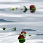 Mourning roses cast by sympathisers float in the lake near the island of Utoya, Norway, today. (AP Photo/Frank Augstein)