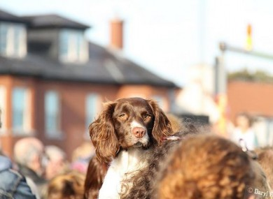 A dog looks over the 5,000-strong crowd at protests in Clontarf today.