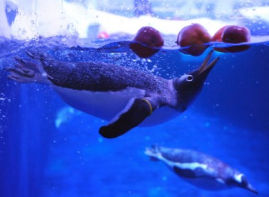 Penguin and Apple (geddit?) are among those being investigated by the Commission.