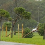 A man walks past young trees blown over by the wind in Southsea, Hampshire. (Image: Chris Ison/PA Wire)