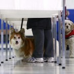 Voters bring their dogs on primary election day at a polling station at in Manchester, NH. (AP Photo/Charles Dharapak/PA Images)