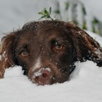 Young dog Tilly gets her first taste of snow after heavy overnight fall across Essex. (Ian Nicholson/PA Wire)