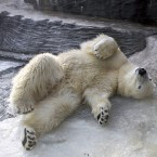 A polar bear in Prague Zoo in the Czech Republic finds a place for relaxation in the freezing cold. Image: CTK Photo/Katerina Sulova/PA Images
