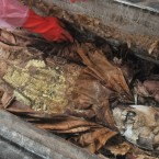The mummy in the royal tomb found in a residential area of the city. (Photo by Wei Yonggang/ChinaFotoPress/PA)
