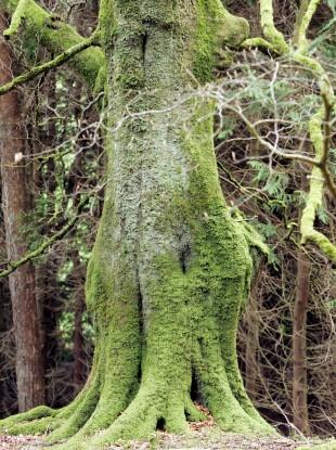 Glen Ding Wood near Blessington in County Wicklow