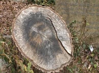 The stump.