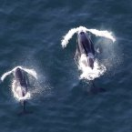 Who said killer whales have no rhythm? Possibly no one. Ever. Until just now. (AP Photo/Ted S. Warren)
