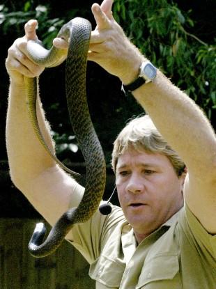 'Crocodile Hunter' Steve Irwin holds an inland taipan snake. The snake is the world's deadliest.