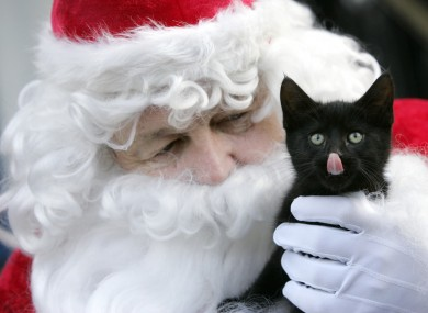 Santa and the kitten 'Spice' at today's launch at the Mansion House in Dublin.