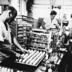 Using a special machine to inoculate each egg with live virus of the new Asiatic flu strain, lab workers at Eli Lilly and Company in Greenfield, Indiana, USA in 1957, in the first step in producing vaccine. (AP Photo)