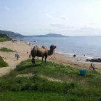 A camel on the Inishowen Peninsula yesterday. WTF? (Pic: Twitter/VisitInishowen, h/t Reddit)