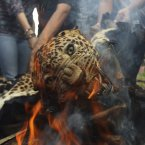 A leopard skin burns as Indian officials and activists burn wildlife contraband including tiger and leopard skins, and bones as part of a campaign to save the tiger in Mumbai, India. Despite conservation efforts, tiger numbers in India have declined due to rampant poaching of the cats for their valuable pelts and body parts that are highly prized in traditional Chinese medicine. (AP Photo/Rafiq Maqbool)