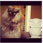 Colonel Meow was one extremely ridiculous looking feline. Sadly, he passed away last month, but his owner still reposts photos on his account.<span class=