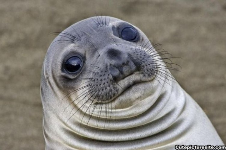 Worried Seal Is The New Meme That Perfectly Sums Up Your Life