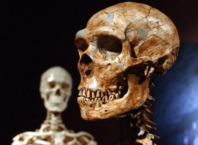 Neanderthal skull, only gorgeous.