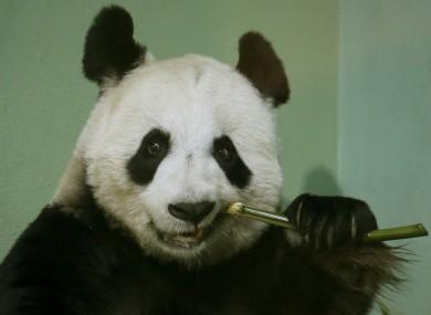 Tian Tian.