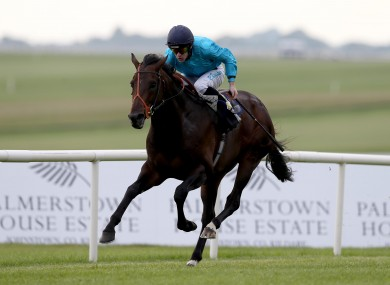 Brown Panther was put down today.