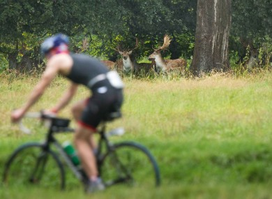 A cyclist passes deer during the Vodafone Dublin City Triathlon National Championships in the Phoenix Park, Dublin last month.