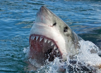 Australian kitesurfer savaged to death in shark attack