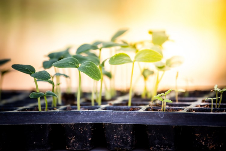 Grow It Yourself Seed Sowing Tips From Our Gardening Guru