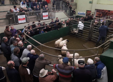 Kenmare Mart in full flow at one of its twice-weekly sales.