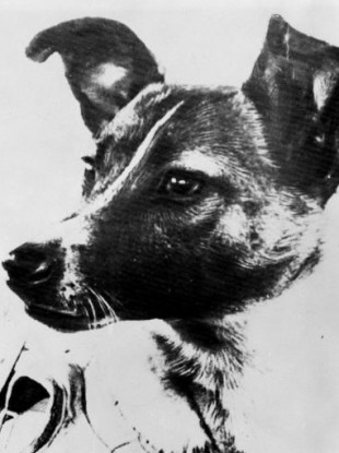 Laika the dog, the first creature to be alive in space.