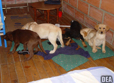 Some puppies rescued from a farm bound for the US