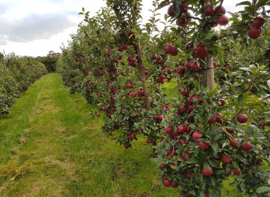 The Apple Farm in south Tipperary
