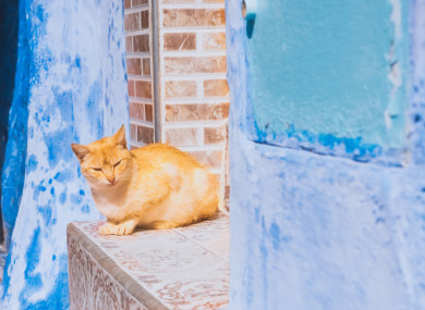 File photo of stray cat in Morocco.