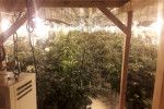 Man (40s) arrested at 450-plant growhouse in Waterford business park