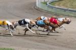 Stock photo of greyhound track.