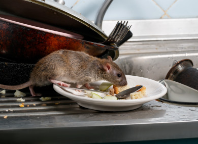 File image: A Garda Recreation Club was closed last month after rodent droppings were found in kitchen, bar and carvery areas.