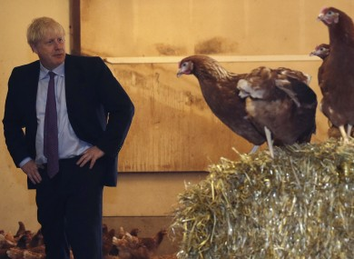 Boris Johnson inspects some chickens during his visit to Shervington Farm, in Wales.